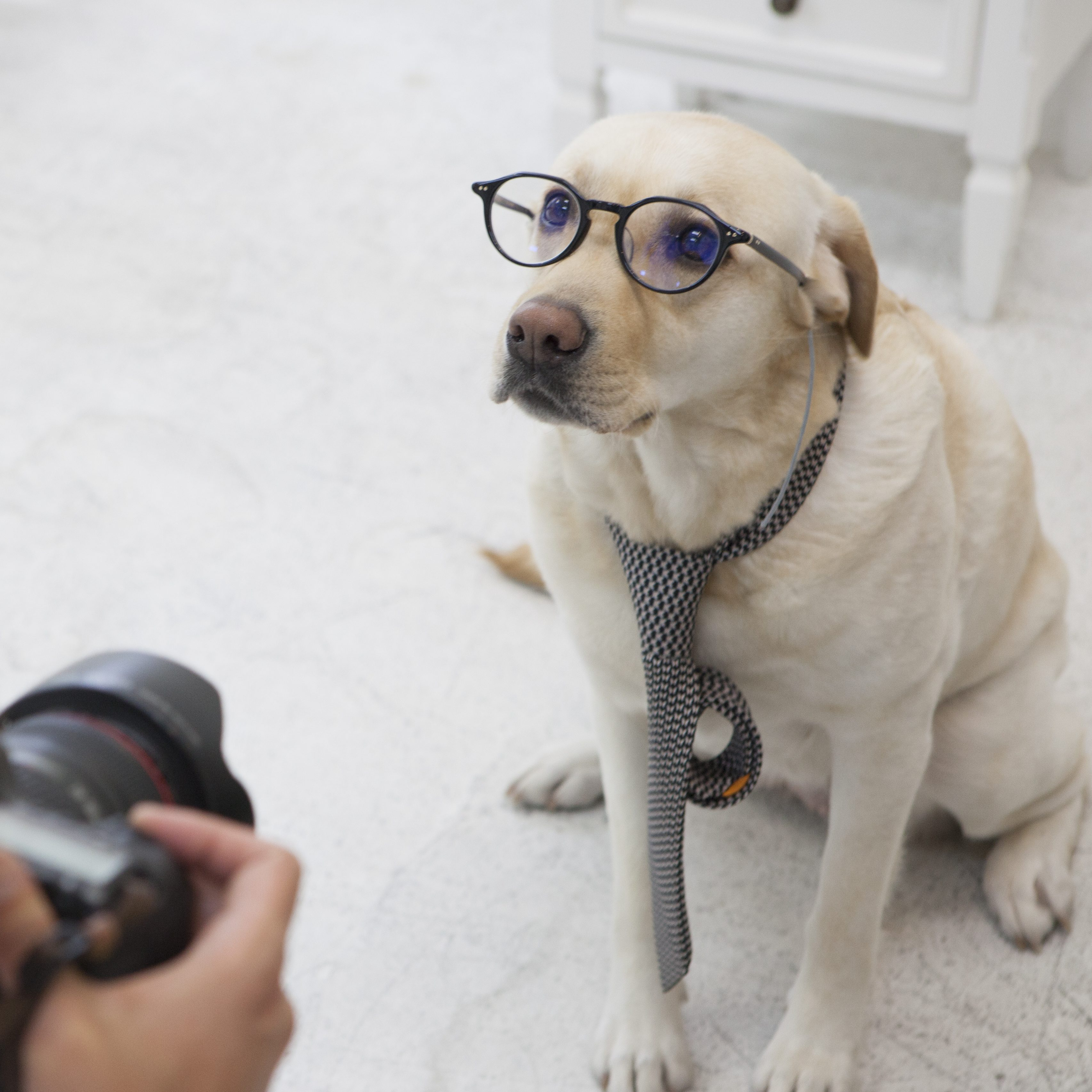 PET MODEL PHOTO CONTEST ペットモデルフォトコンテスト
