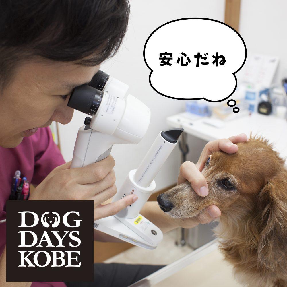 愛犬のための動物眼科