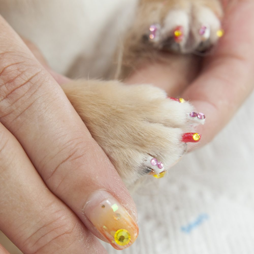 愛犬とおそろいのネイルサロン